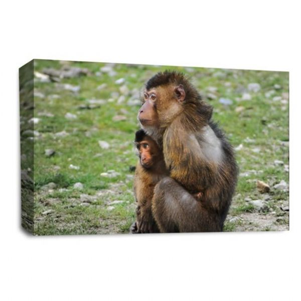 Mothers Love - Monkey Canvas Wall Art Picture Print